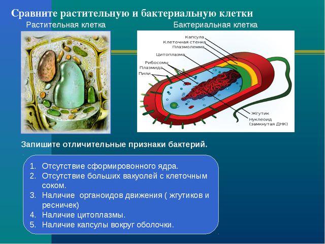 Сравните растительную и бактериальную клетки Растительная клетка Бактериальна...