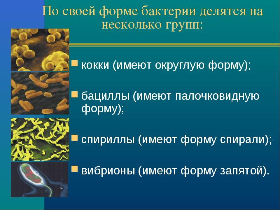 По своей форме бактерии делятся на несколько групп:  кокки (имеют округлую ф...