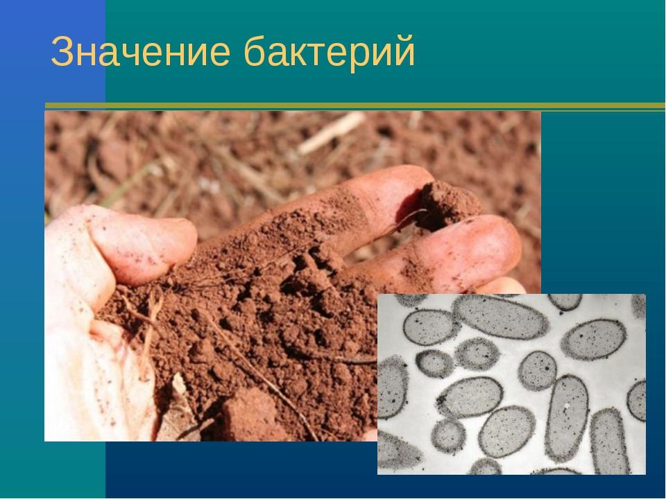 Значение бактерий
