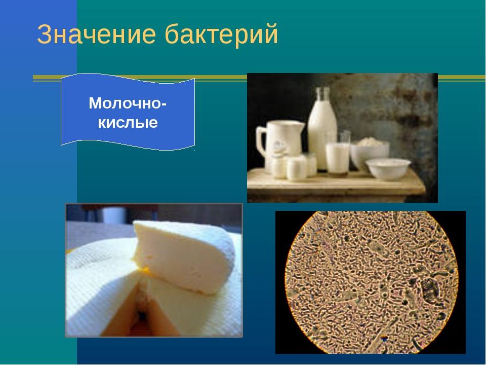 Значение бактерий Молочно- кислые