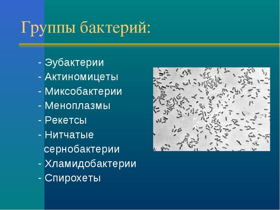 Группы бактерий: - Эубактерии - Актиномицеты - Миксобактерии - Меноплазмы - Р...
