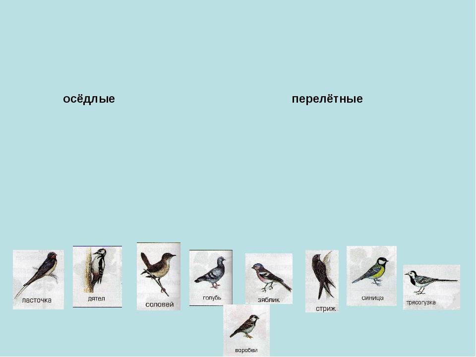 осёдлые перелётные