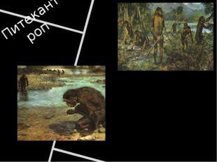 Питекантроп Спустя 25 тыс. лет появился человек прямоходящий или питекантроп.