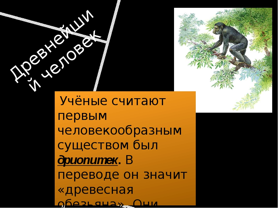 Древнейший человек Учёные считают первым человекообразным существом был дриоп...
