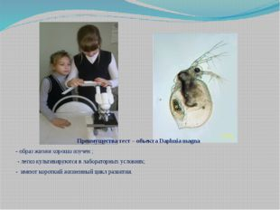 Преимущества тест – объекта Daphnia magna - образ жизни хорошо изучен ; - лег