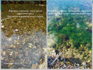 Верхняя, «светлая» часть русла (фрагмент дна). Нитчатые водоросли отсутствуют