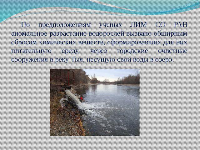 По предположениям ученых ЛИМ СО РАН аномальное разрастание водорослей вызвано...