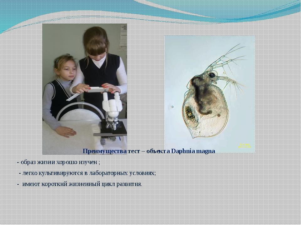 Преимущества тест – объекта Daphnia magna - образ жизни хорошо изучен ; - лег...