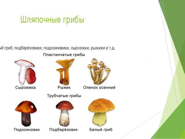 Шляпочные грибы Белый гриб, подберёзовики, подосиновики, сыроежки, рыжики и т...