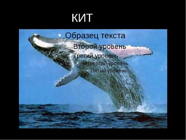 КИТ КИТ