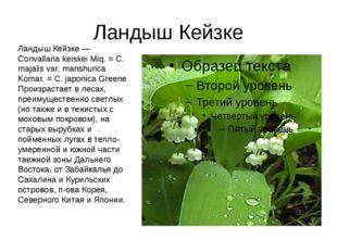 Ландыш Кейзке Ландыш Кейзке — Convallaria keiskei Miq. = С. majalis var. mans