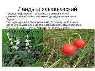 Ландыш закавказский Ландыш закавказский — Convallaria transcaucasica Utkin Об