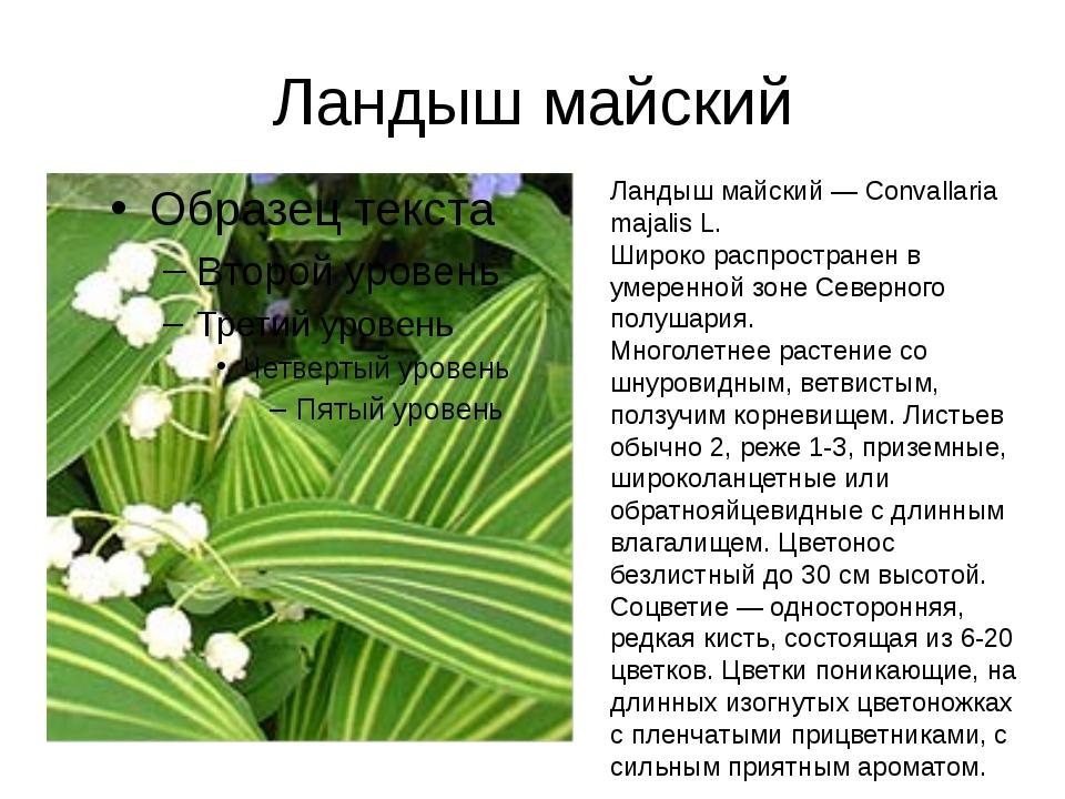 Ландыш майский Ландыш майский — Convallaria majalis L. Широко распространен в...
