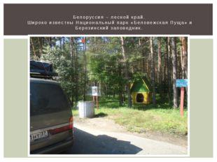 Белоруссия – лесной край. Широко известны Национальный парк «Беловежская Пуща