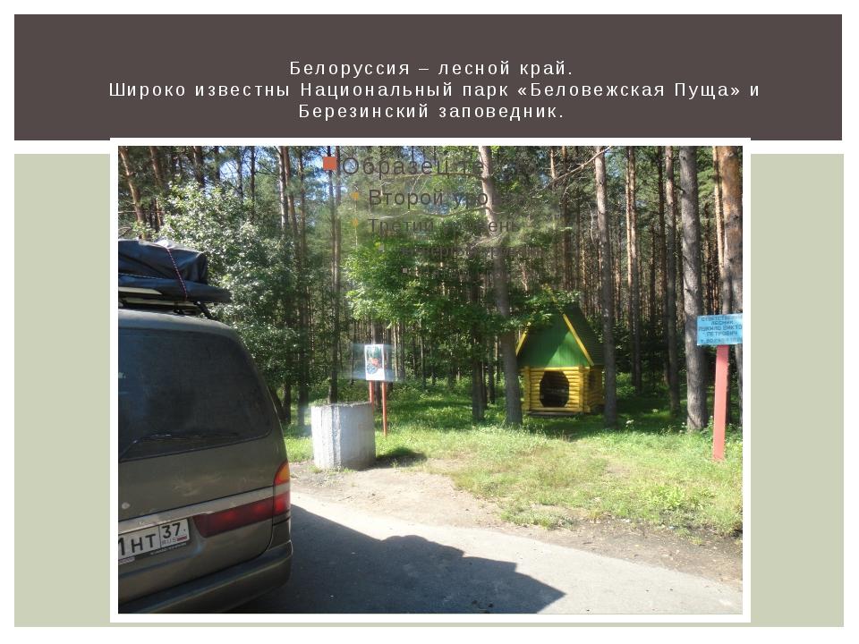 Белоруссия – лесной край. Широко известны Национальный парк «Беловежская Пуща...