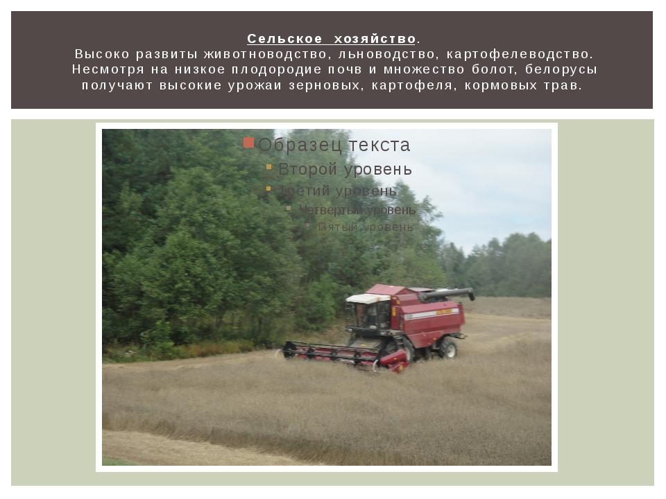 Сельское хозяйство. Высоко развиты животноводство, льноводство, картофелеводс...