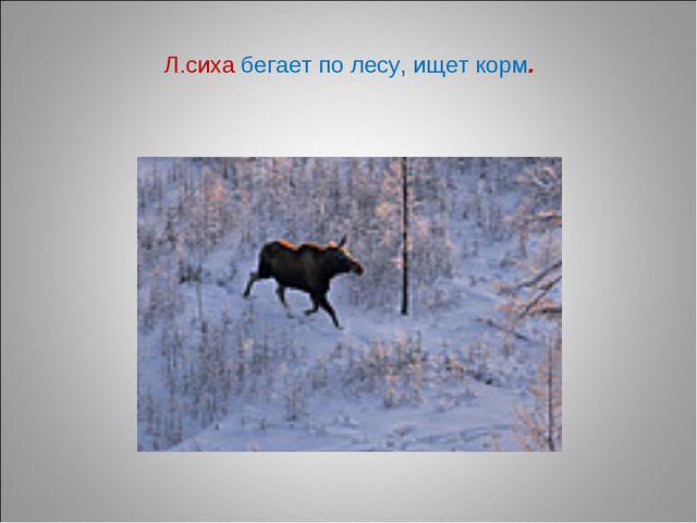 Л.сиха бегает по лесу, ищет корм.