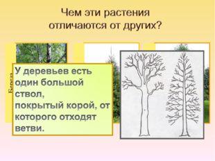 Береза Ель Рябина