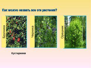Как можно назвать все эти растения? Кустарники