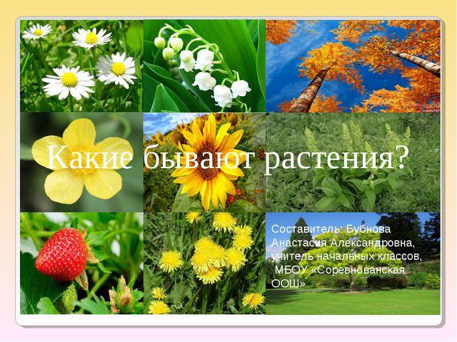 Какие бывают растения? Составитель: Бубнова Анастасия Александровна, учитель...