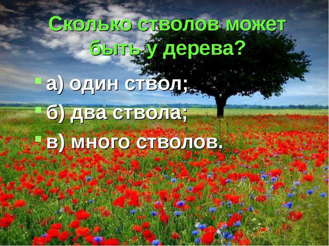Сколько стволов может быть у дерева? а) один ствол; б) два ствола; в) много с...