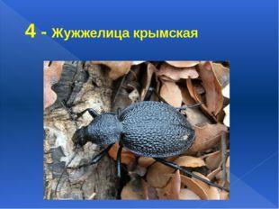 4 - Жужжелица крымская