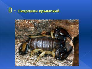 8 - Скорпион крымский