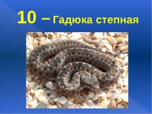 10 – Гадюка степная