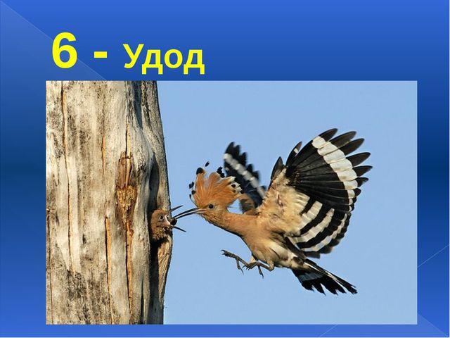 6 - Удод