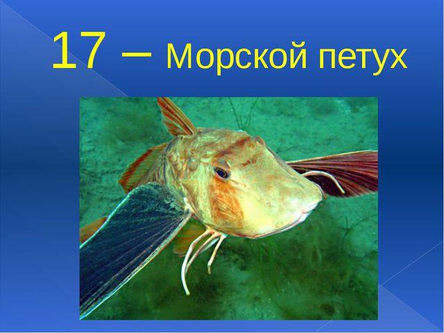 17 – Морской петух
