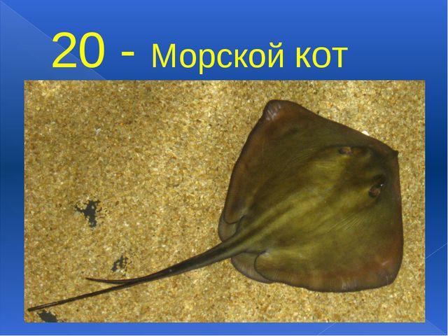 20 - Морской кот