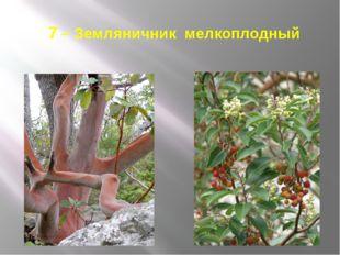7 – Земляничник мелкоплодный