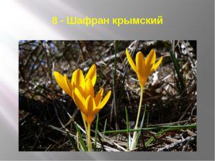8 - Шафран крымский