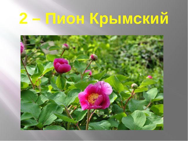 2 – Пион Крымский
