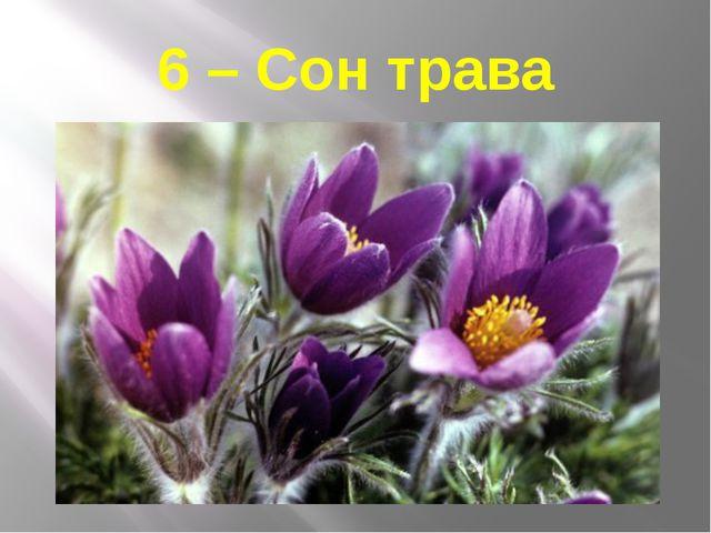 6 – Сон трава