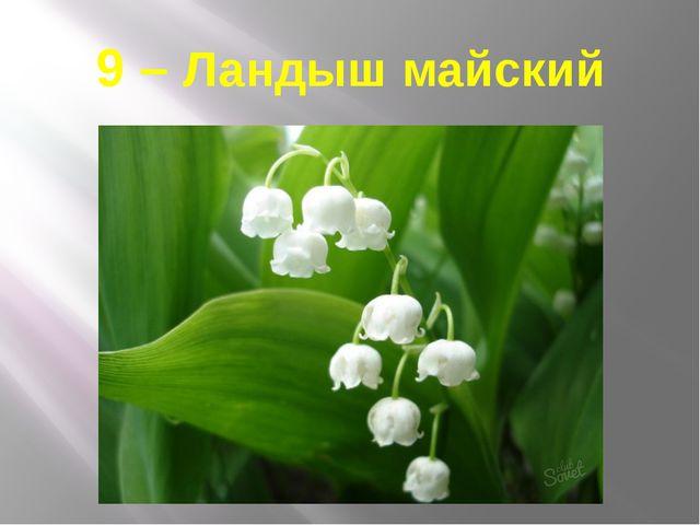 9 – Ландыш майский