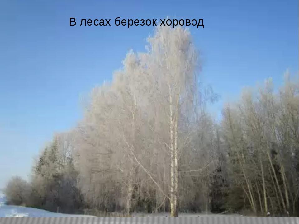 В лесах березок хоровод