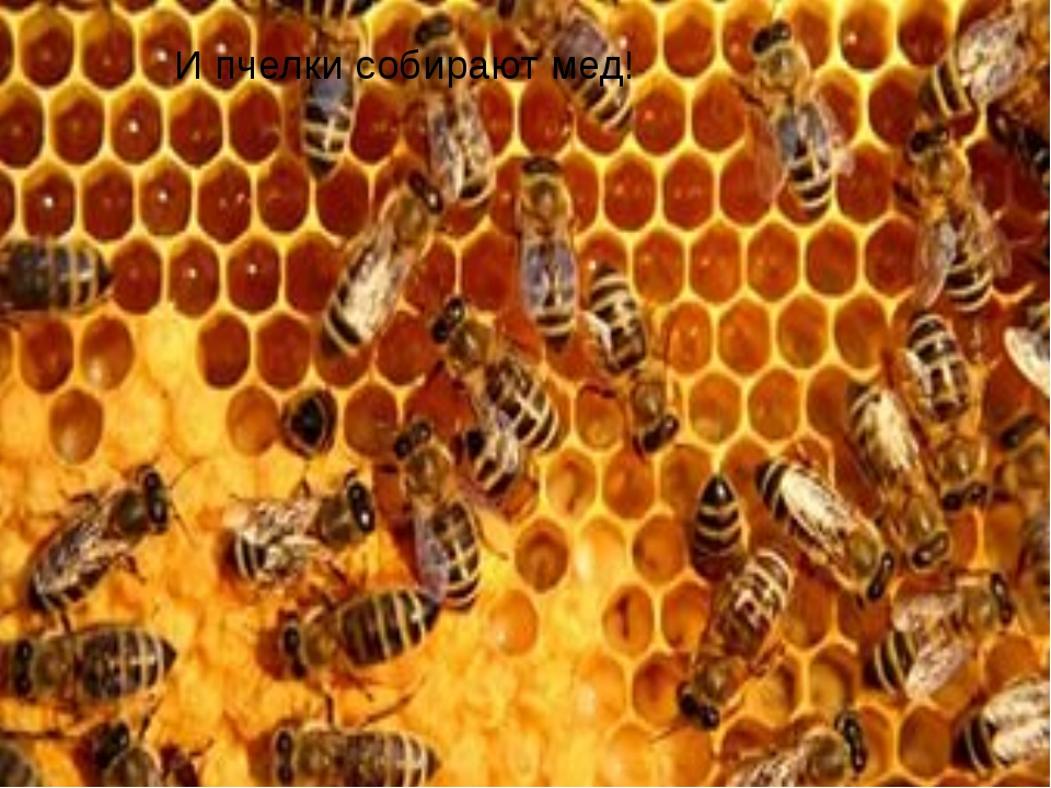 И пчелки собирают мед!