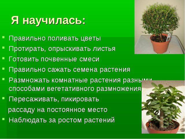 Я научилась: Правильно поливать цветы Протирать, опрыскивать листья Готовить...