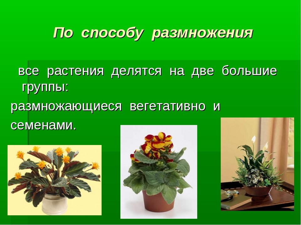 По способу размножения все растения делятся на две большие группы:...