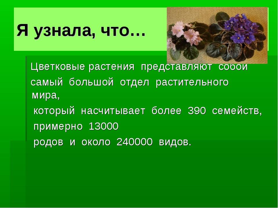 Я узнала, что… Цветковые растения представляют собой самый большой отдел...