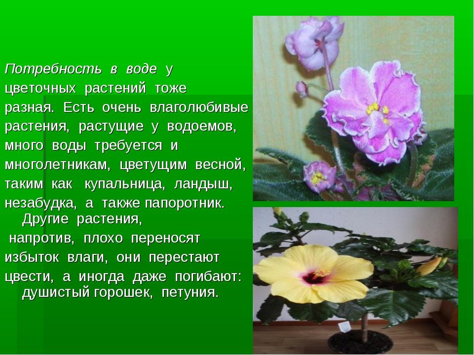 Потребность в водеу цветочных растений тоже разная. Есть очень вл...