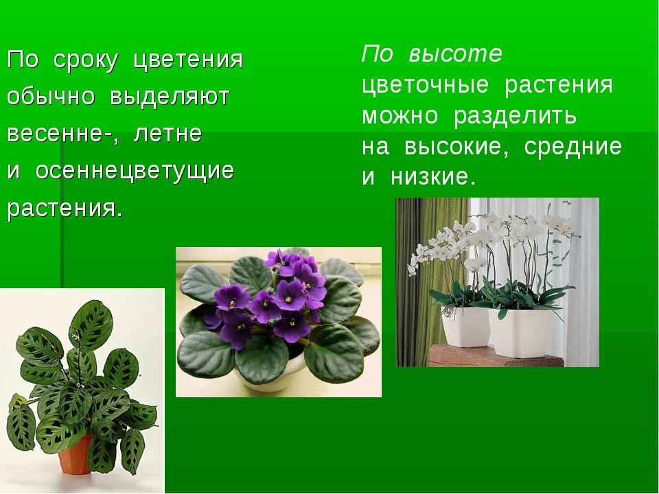 По сроку цветения обычно выделяют весенне-, летне и осеннецветущие ра...