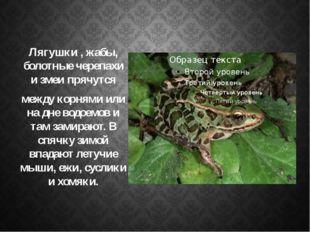 Лягушки , жабы, болотные черепахи и змеи прячутся между корнями или на дне во