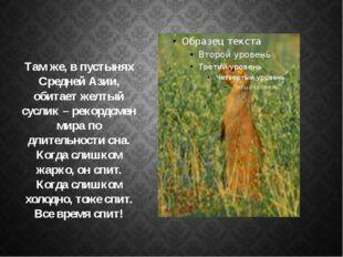Там же, в пустынях Средней Азии, обитает желтый суслик – рекордсмен мира по д