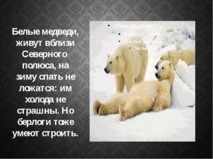 Белые медведи, живут вблизи Северного полюса, на зиму спать не ложатся: им х