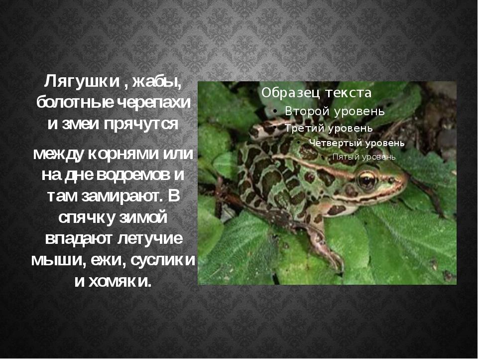 Лягушки , жабы, болотные черепахи и змеи прячутся между корнями или на дне во...