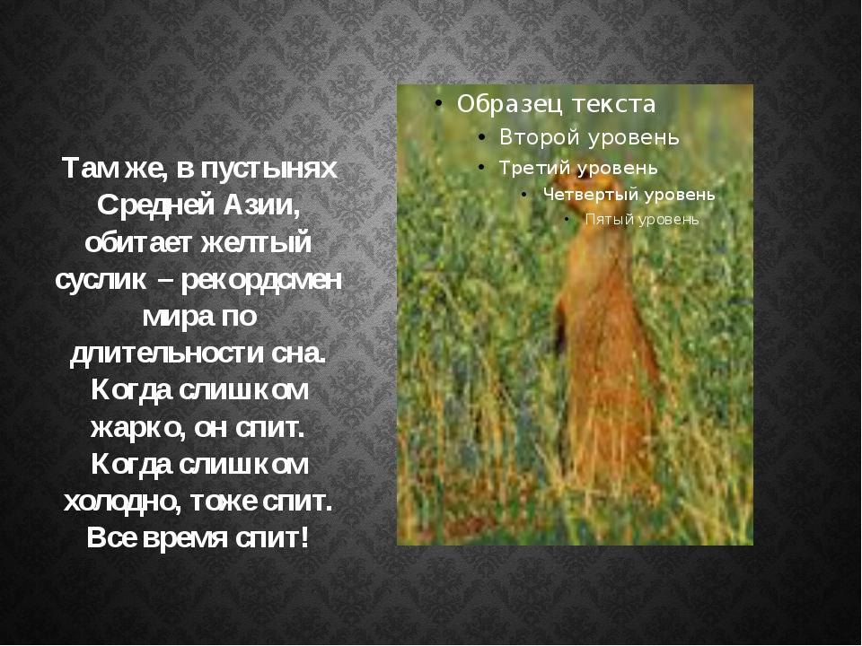 Там же, в пустынях Средней Азии, обитает желтый суслик – рекордсмен мира по д...