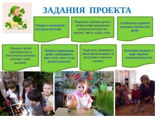 ЗАДАНИЯ ПРОЕКТА Расширить знания детей о культурных растениях. Обобщать пред