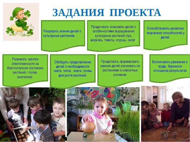 ЗАДАНИЯ ПРОЕКТА Расширить знания детей о культурных растениях. Обобщать пред...